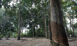 Sobre a Amazônia, Michelle Bachelet destacou ainda o uso indevido do direito penalpara silenciar vozes críticas