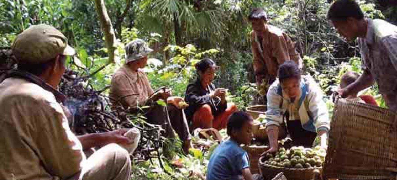 la production locale au coeur de la sécurité alimentaire