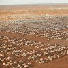 The sprawling Dadaab camp in Kenya, the world's largest refugee complex.