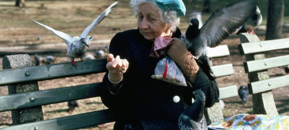 An elderly person feeds pigeons in New York City's Central Park.