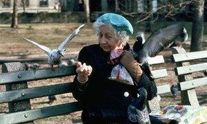 纽约中央公园,一位老人正在喂鸽子。