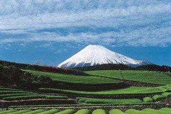 जापान का फूजीसन इलाक़ा जिसे प्राकृतिक सुन्दरता के साथ, पवित्र स्थल और कलात्मक अभिप्रेरण का स्रोत समझा जाता है.