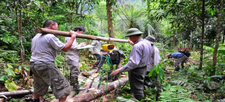 Más de 25% de la población mundial dependen de los bosques para su subsistencia. Foto: FAO