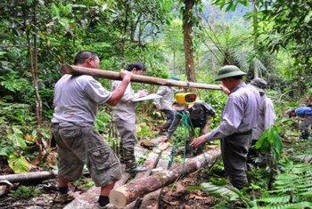 Más de 25% de la población mundial dependen de los bosques para su subsistencia.
