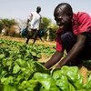 Smallholders and small family farms produce up to 80% of the food in many developing countries.
