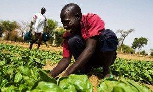 Les petits exploitants et les petites exploitations familiales produisent jusqu'à 80% de la nourriture dans de nombreux pays en développement.