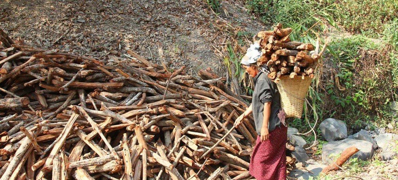 Une femme rassemble du bois dans l'État Chin, à Myanmar, où les ménages s'appuient fortement sur le bois pour la cuisine, le chauffage et autres. Photo : PNUD/Tom Cheatham