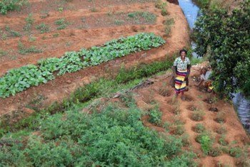 Small farms in Madagascar are hard hit by erratic weather and locust invasion.