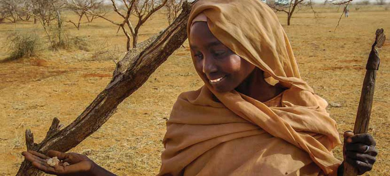 سيدة  تعمل في زراعة الصمغ العربي في جنوب كردفان - السودان