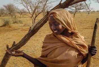 Une jeune femme de la tribu Jawama'a, à El Darota, dans le Nord-Kordofan, au Soudan, ramasse de la gomme arabique.