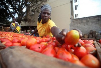 Photo: FAO/Paballo Thekiso