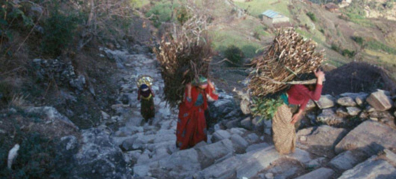 尼泊尔中西部的农村妇女从附近的森林运送薪柴到山上的房屋。
