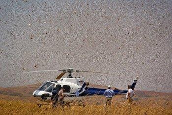 La FAO utilise des hélicoptères dans la lutte antiacridienne.
