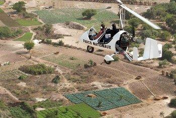 La technique de l'insecte stérile consiste à relâcher par voie aérienne des mâles stériles pour réduire le nombre de mouches tsé-tsé. Photo FAO/Domaine de Kalahari