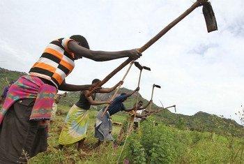 Communal gardening, Kaabong District in the Karamoja region, Uganda.