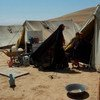 Desplazados por la violencia en Afganistán.  Foto de archivo: UNAMA/Eric Kanalstein