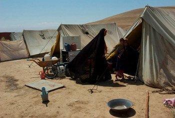 阿富汗北部巴尔赫省的一个境内流离失所者营地。