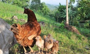 Uncontrolled live poultry trade poses the highest risk of A(H7N9) introduction.