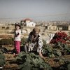 Water scarcity is one of the most urgent food security issues facing Near East and North Africa countries: fresh water availability in the region is expected to drop by 50% by year 2050.