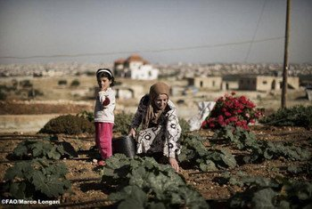 Photo : FAO / Marco Longari