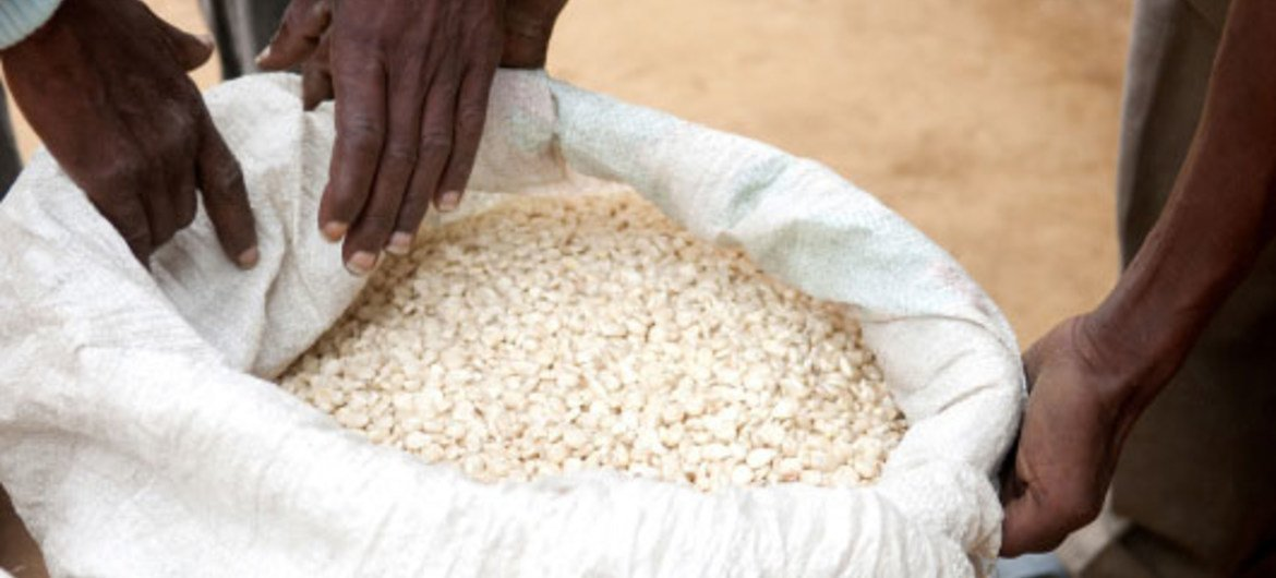 New initiative has helped Somali farmers produce maize that meets international quality standards.