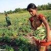亚太地区应尽快就增加粮食产量和解决营养不足的方式做出重大决定。