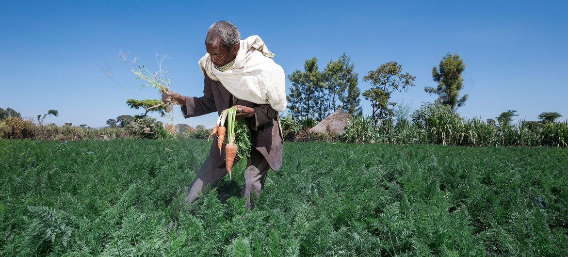 Un agriculteur en Afrique. Photo FAO/FIDA/PAM/Petterik Wiggers