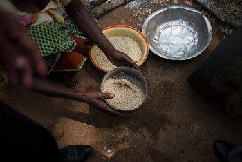 Une femme tamise des graines dans un camp de personnes déplacées par la violence en République centrafricaine. Photo OCHA/Phil Moore