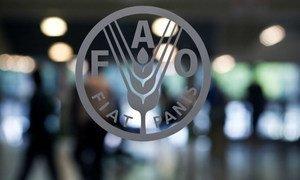 Photo ONU/FAO