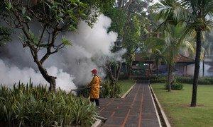 Mosquito fogging in Bali, Indonesia.