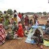 Refugiados de la República Centroafricana en Camerún  Foto: ACNUR/M.Poletto