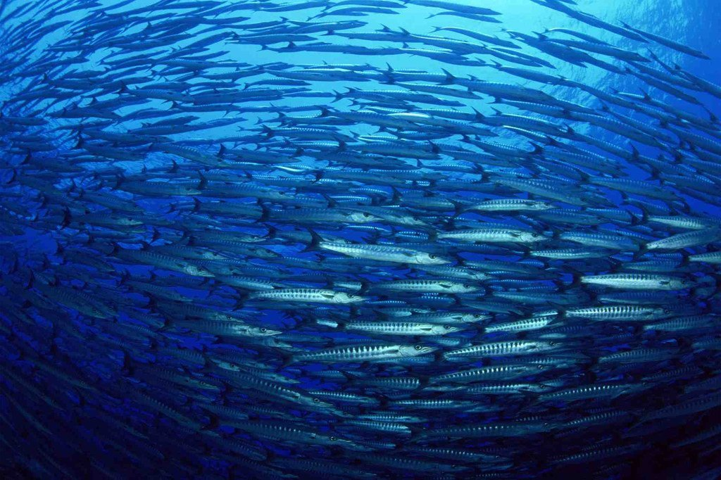 Healthy oceans have a central role to play in solving one of the biggest problems of the 21st century – how to feed 9 billion people by 2050.