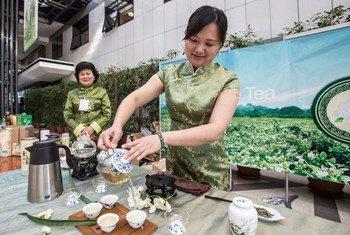 Dégustation de thé au jasmin chinois au siège de la FAO à Rome.