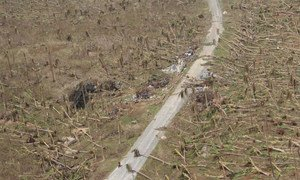 11 November 2013, Eastern Samar, Philippines: Coconut trees knocked down by the storm, devastating the livelihood of the people in Eastern Samar.