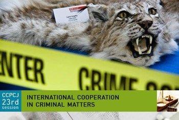 Los delitos contra la vida silvestre no están tipificados como actividades criminales en algunos países. Foto de archivo: UNODC