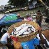 छोटे स्तर पर मछली पकड़ने का व्यवसाय दुनिया भर में करोड़ों लोगों को रोज़गार उपलब्ध कराता है.