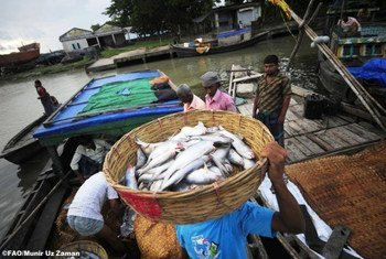 Small-scale fisheries are the source of employment for more than 90 percent of the world's capture fishers and fish workers.