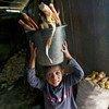 تشير أحدث التقديرات العالمية لمنظمة العمل الدولية إلى أن إجمالي عدد الأطفال العاملين يبلغ 168 مليون طفل – بما يعادل طفلا من كل عشرة أطفال.