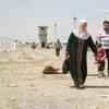 Iraquies desplazados por la violencia en Mosul  Foto: ACNUR/ R.Nuri