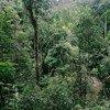 Bosque en Indonesia. Foto: Banco Mundial/Curt Carnemark