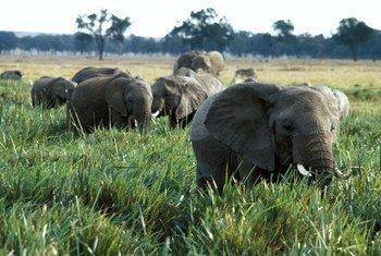 ONU chama a atenção ainda para o comércio ilegal de espécies e atividades do crime organizado contra a natureza
