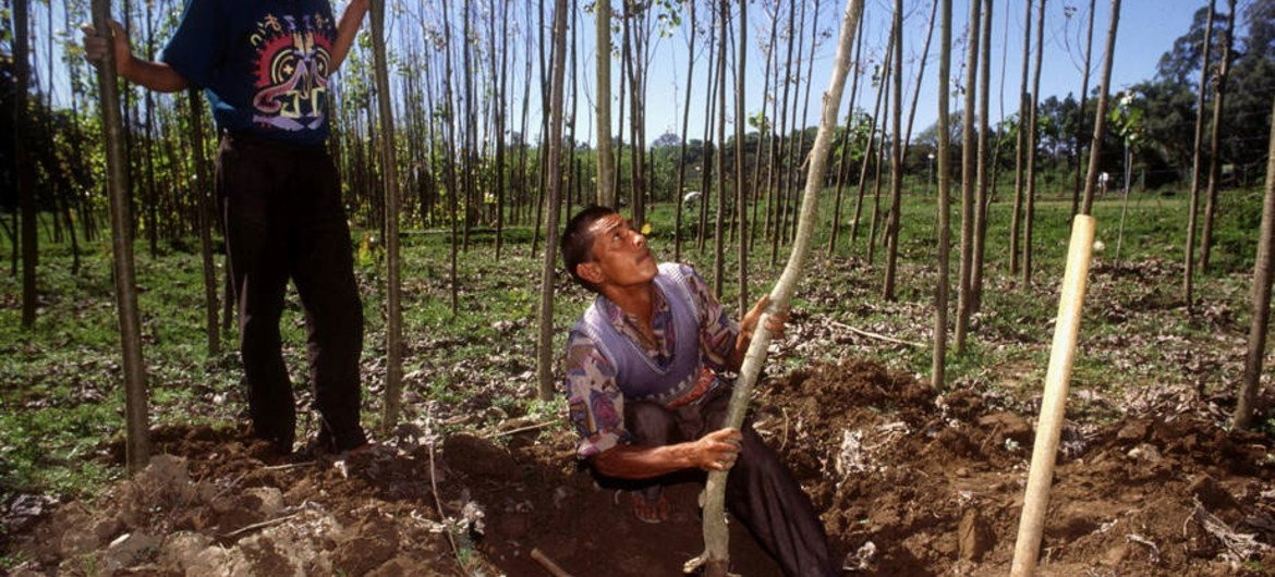 In many rural economies, the forest enterprises of families and communities are major contributors to local livelihoods.