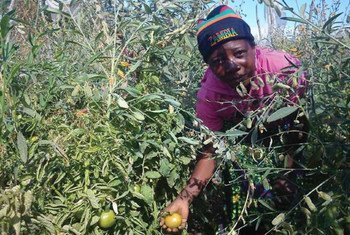 New UN report says investment in climate change adaptation can help promote the ivelihoods of 65 per cent of Africans.