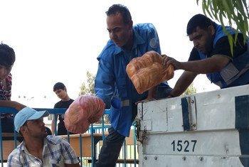 Ayuda de emergencia en Gaza. Foto: PMA/Ayman Shublaq