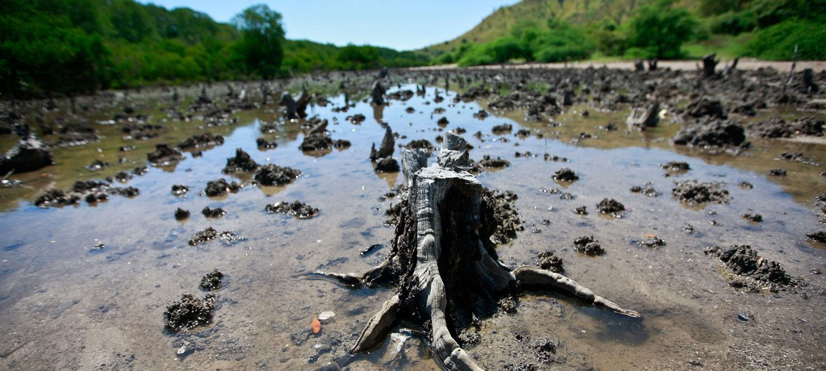 Mangroves are cut down in Hera, Timor-Leste, 16 km from capital Dili, where frequent trash dumping threatens the area's natural plant and wildlife.