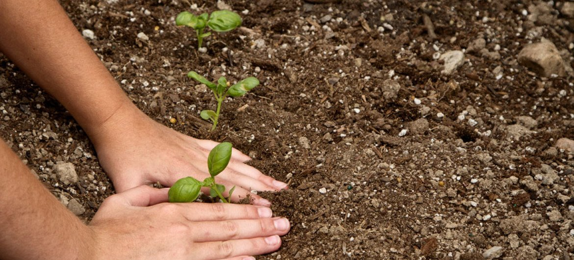A young child plants a seedling in the dirt. (Image used under license from Shutterstock.com)