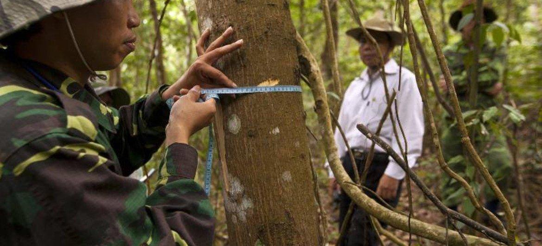 Continúa la deforestación, adviertió la ONU. Foto de archivo: FAO/Joan Manuel Baliellas
