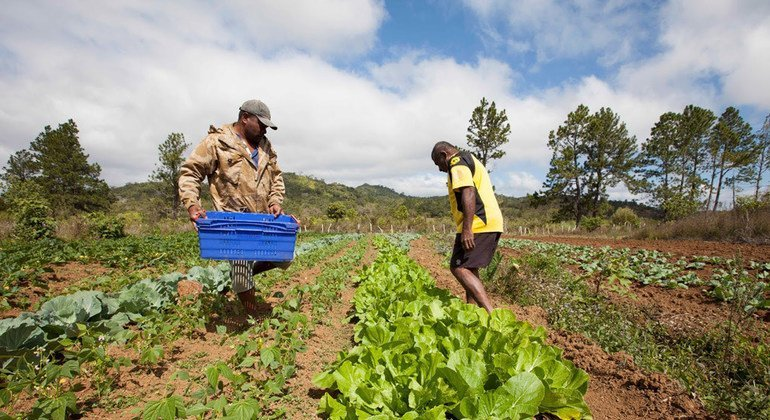 Small farmers can be major actors in reducing agriculture's carbon footprint - UN agency