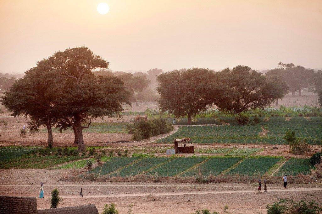 Des terres agricoles entreprises dans le cadre du projet de grande muraille verte pour le Sahara soutient les communautés locales dans la gestion durable des zones désertiques.