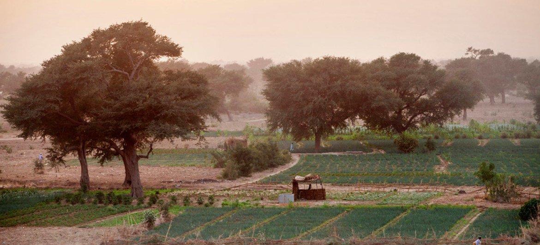 Инициатива «Великая зеленая стена» была начата в 2007 году для «сдерживания» пустыни Сахара. В рамках проекта будет создана полоса зеленых насаждений протяженностью 8000 км, проходящая по территории 11 стран Африки.